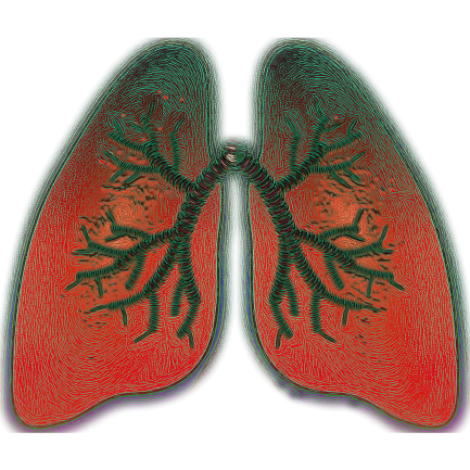 lung-4051083_1920
